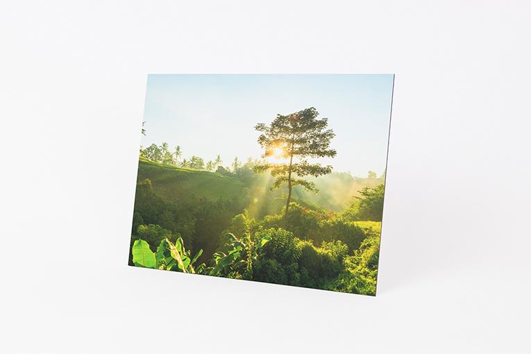 Fuldt print - Alm
